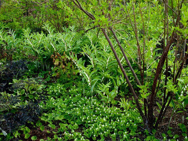 Woodland. Meadow Garden. Tokachi Millenium Forest / Dan Pearson Studio