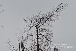Фотография: 546• Бесплатное фото • Дерево • Природа