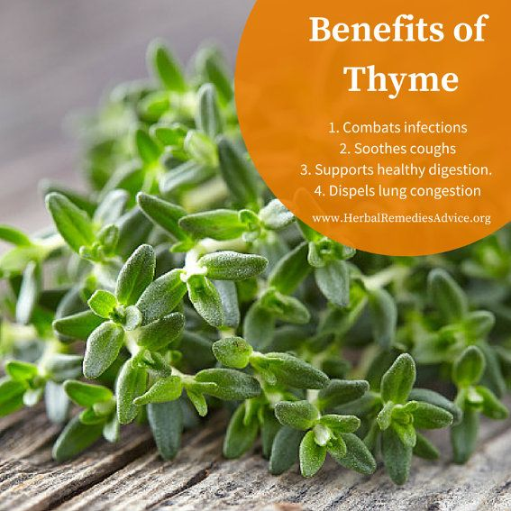 Native to the rocky soils of the sunny Mediterranean, thyme offers us powerful and aromatic medicine in a small package. Taken as a tea or tincture, thyme is a valuable ally for addressing poor digestion and easing the symptoms of colds or influenza.