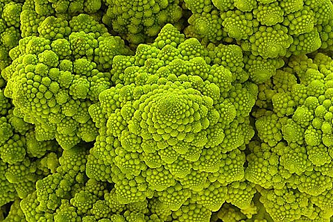 I love to photograph food. I would love a shot of Romanesco