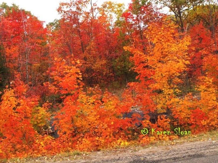 Autumn in the #Haliburton Highlands.
