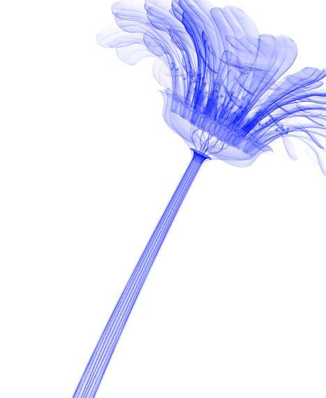 Gerbera: Macoto Murayama, Inorgan Flora, Cg Illustrations, Organizations Beautiful, Japan Artists, Digital Artists, Artists Macato, Flora3Jpg 450549, Illustrations Macoto