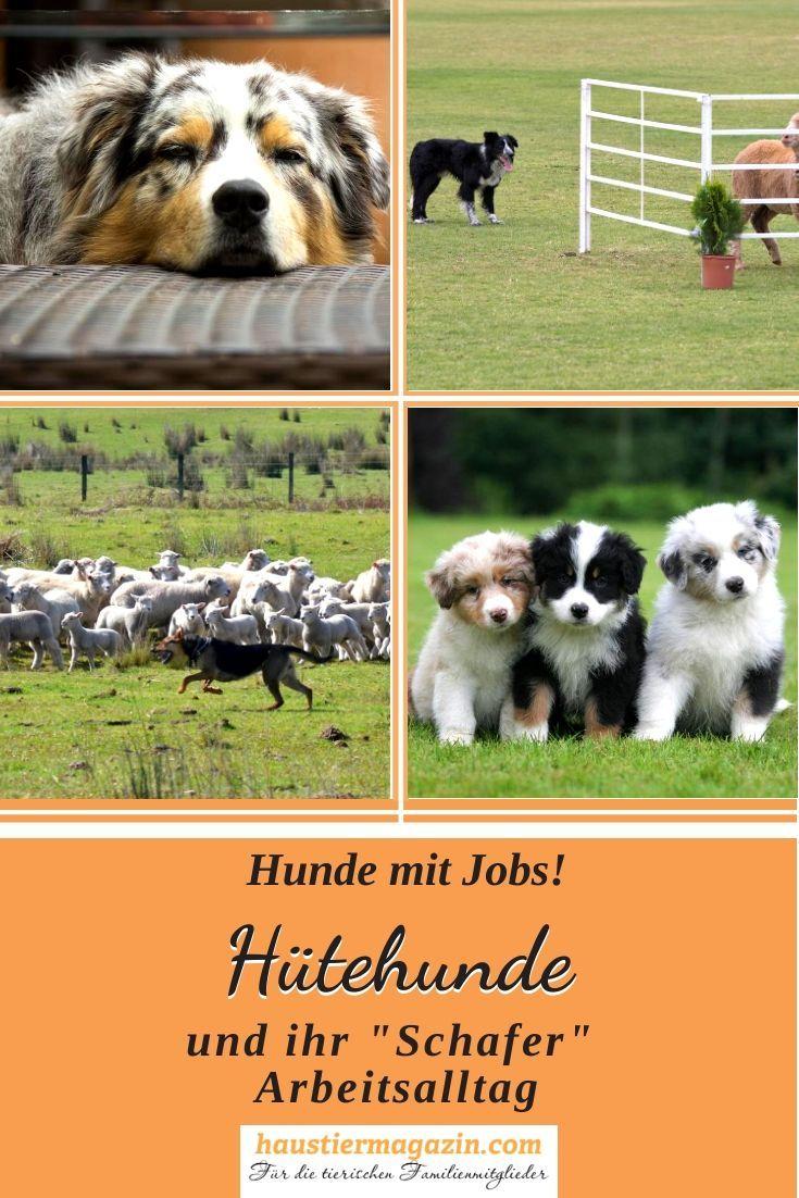 Hutehunde Eine Ubersicht Uber Die Arbeit An Der Herde Haustiermagazin Hunde Hundehaltung Hunderassen