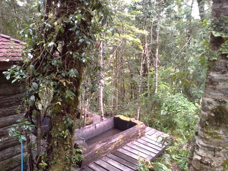 Entre el bosque.