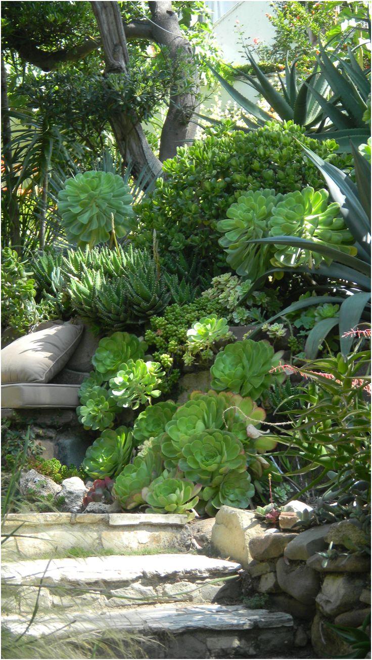 L'escalier plantes aux succulentes