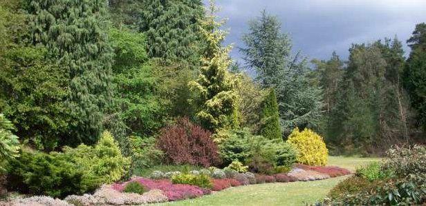 Laurel and Leylandii Hedging for Sale – Evergreen Hedging Plants - http://www.hedgesonline.com