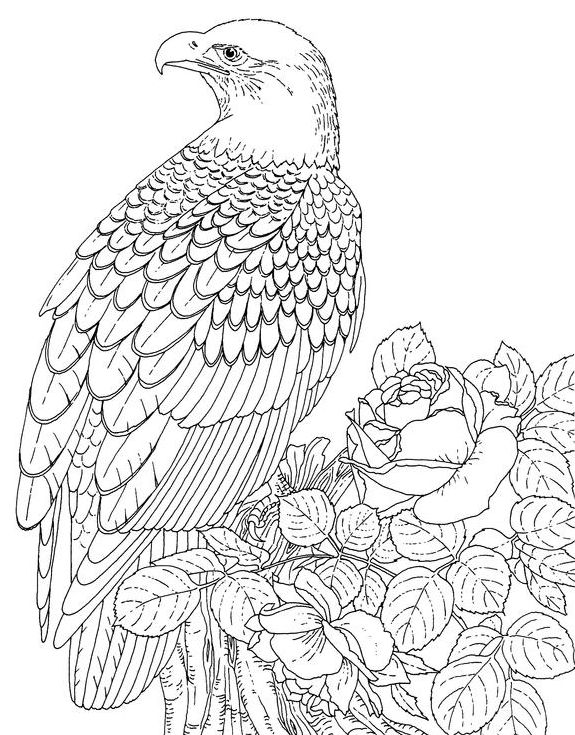 3d coloring pages for adults of an eagle resting online coloring page