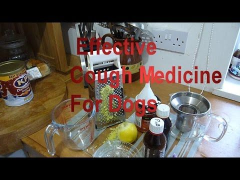 Cough Syrup Medicine For Dogs, Home Made Recipe Highly Effective Remedy for Kennel Cough - YouTube