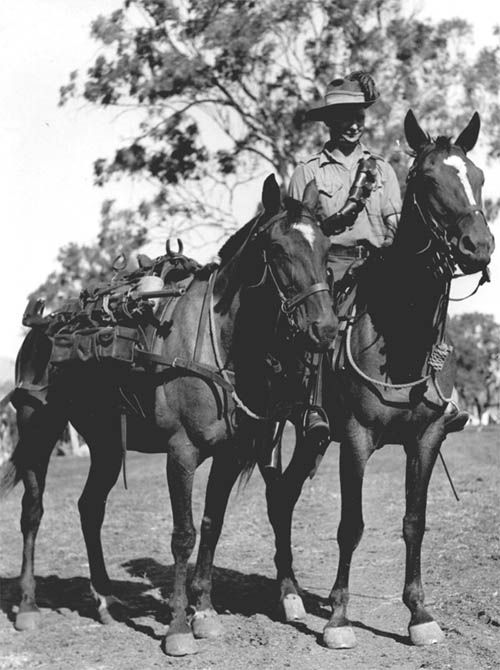"Australian horses were again more reliable and showed greater endurance than the other breeds. About 160,000 Australian horses served in World War 1 and their performance was best summed up by R.M. Preston D.S.O. in his book ""The Desert Mounted Corps"" - ""The majority of horses in the Corps were Walers and there is no doubt that these hardy Australian horses make the finest cavalry mounts in the world"".  Frank Derrick - Monto Troup 5th Light Horse Regiment"