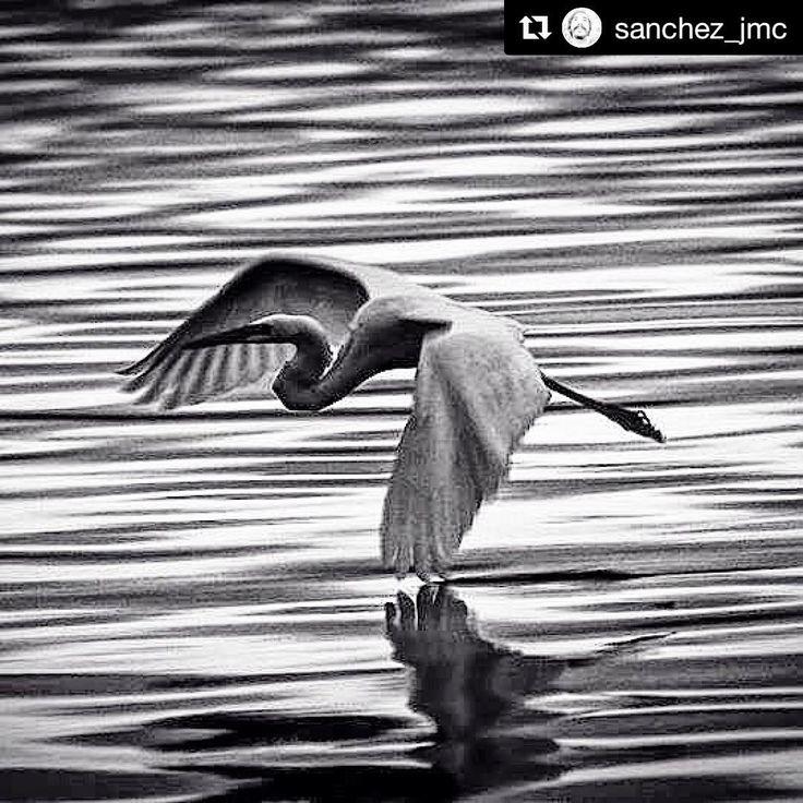 A Natureza é sobretudo: movimento e poesia! Obra fotográfica de @sanchez_jmc recolhida nas águas do mar de Itaguçu. Também disponível em Sketchup na biblioteca 3dwatehouse acessível pelo link deste perfil…