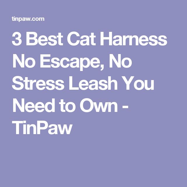 3 Best Cat Harness No Escape, No Stress Leash You Need to Own - TinPaw
