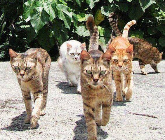 *A group of cats walked into ThunderClan camp. Their leader growled* ATTACK! (RP here)