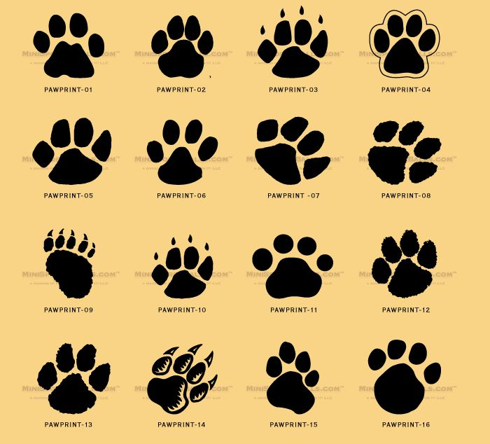 dog paw prints in - photo #42