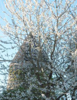 """""""Neige de printemps"""" sur mon blog https://mngauteur.wordpress.com"""