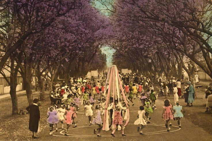 Jacaranda maypole dance Grafton