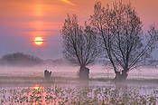 Biebrza River National Park, Poland.