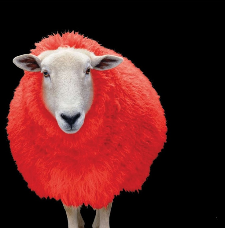 Red sheep by Giesswein