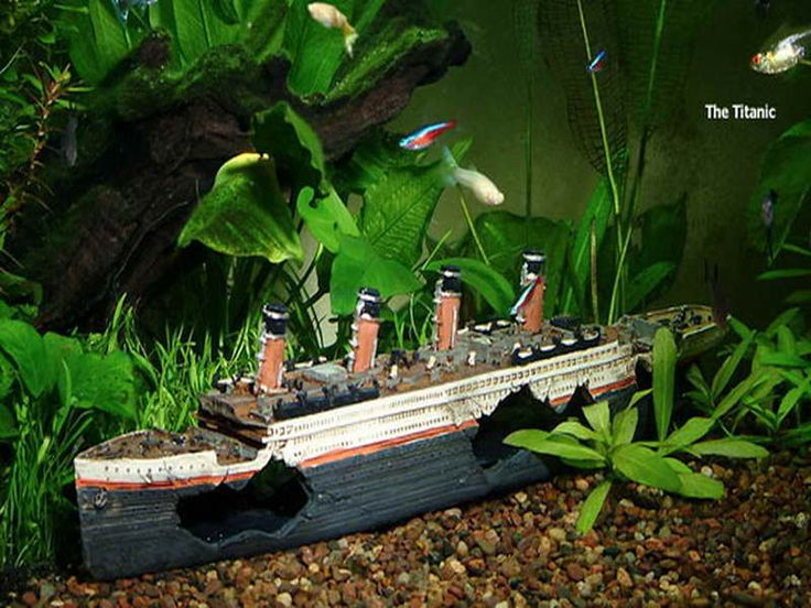17 best ideas about cool fish on pinterest pretty fish for Aquarium decoration shipwreck
