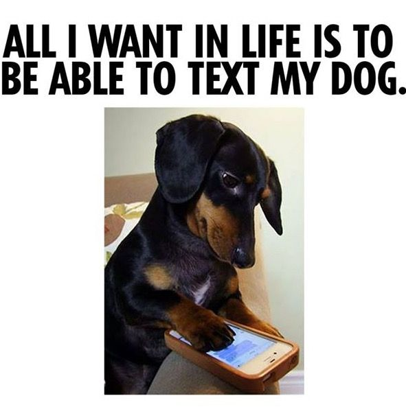 Best Animal Memes Images On Pinterest Funny Animals Funny - Dogs able text 30 hilarious texts dogs