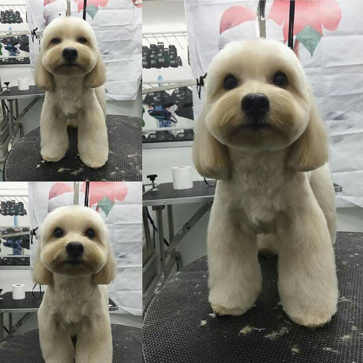 Dog Gone Gorgeous Grooming Salon