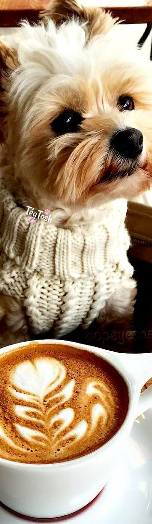 "❇Téa Tosh❇ Popeye the Foodie Dog  ""Cooler weather calls for sweaters and cappuccinos"