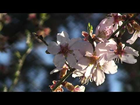 Relax Nature Sounds Relajacion Naturaleza Bosque Video