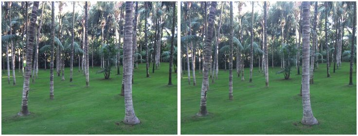 Tenerife Loro Park Trees 3D 2017