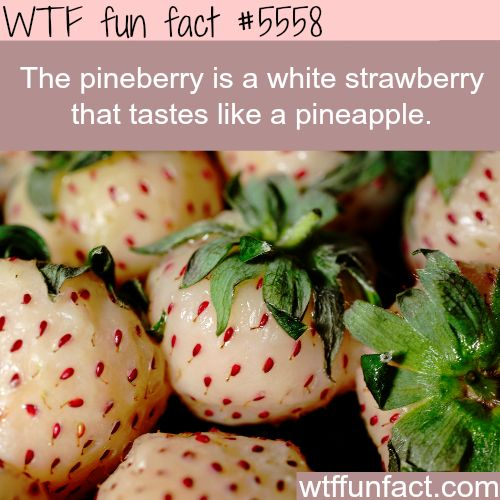 : Pineberry - WTF fun facts | April 1 2016 at 07:39AM | http://www.letstfact.com