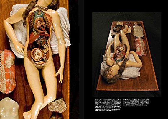 「アナトミカル・ヴィーナス 解剖学の美しき人体模型」がグラフィック社から2017/2/7に発売されます。 本書が特徴的なのは世界各国の博物館などに所蔵されている女性の解剖模型や解剖図が多数掲載されていることです。歴史的な資料や芸術作品から、解剖模型、解剖図を紐解きます。 著者はニューヨークを拠点とするアーティスト、キュレーター、研究者であるであるジョアンナ・エーベンステインさん、「『進撃の巨人』と解剖学 その筋肉はいかに描かれたか」や「構図がわかれば絵画がわかる」などで知られる美術評論家の布施英利さんが監修しています。 224ページ、価格は3,024円です。気になった方は是非!!!