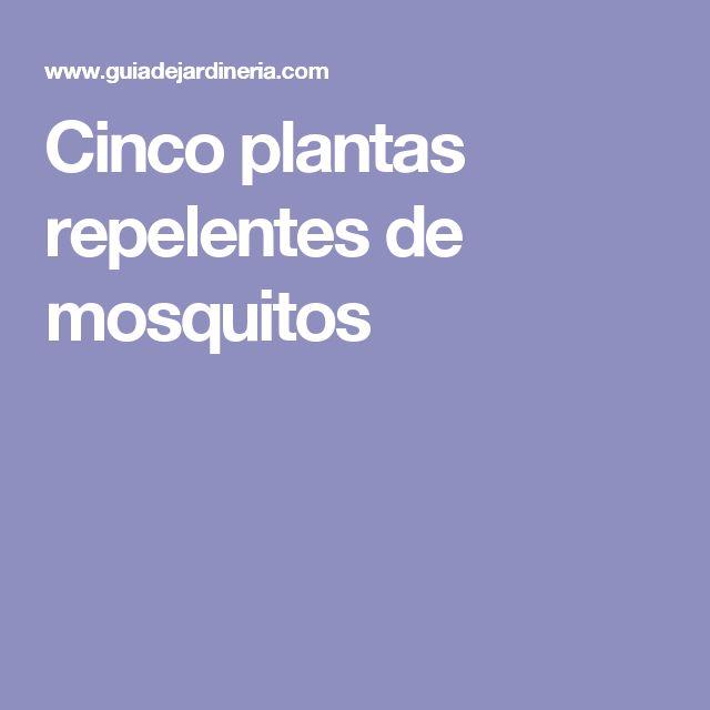 Cinco plantas repelentes de mosquitos