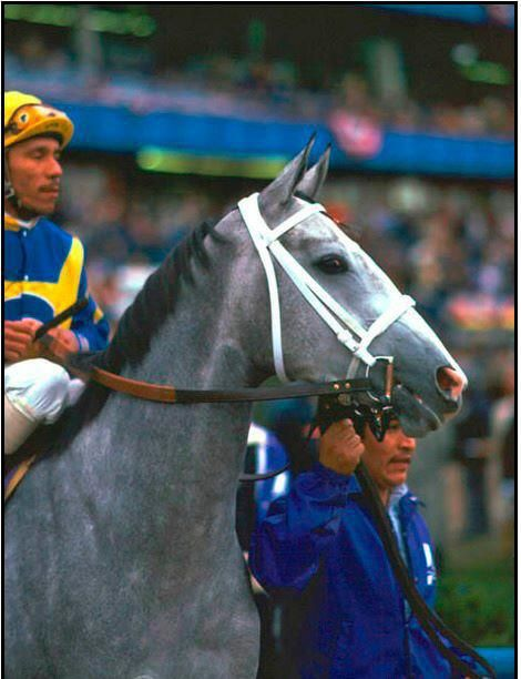 Lady's Secret, Horse of the Year and daughter of the great Secretariat…