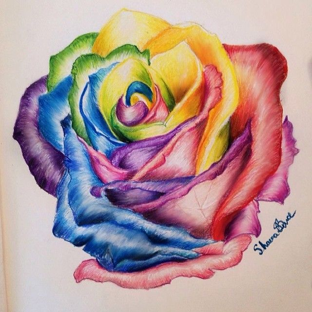 Quick Sketch Of The Day 🌈 #rose #rainbow #drawing