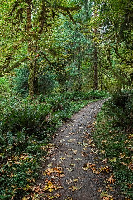 Autumn in The Woods - Olympic National Park, Washington www.facebook.com/loveswish
