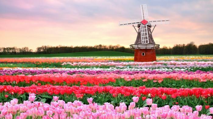 Gambar Taman Bunga Tercantik Di Dunia Gambar Bunga Tercantik Di Duniabunga Tercantik Di Duniataman Bunga Tercantik Di Du Bunga Tulip Kebun Bunga Taman Indah