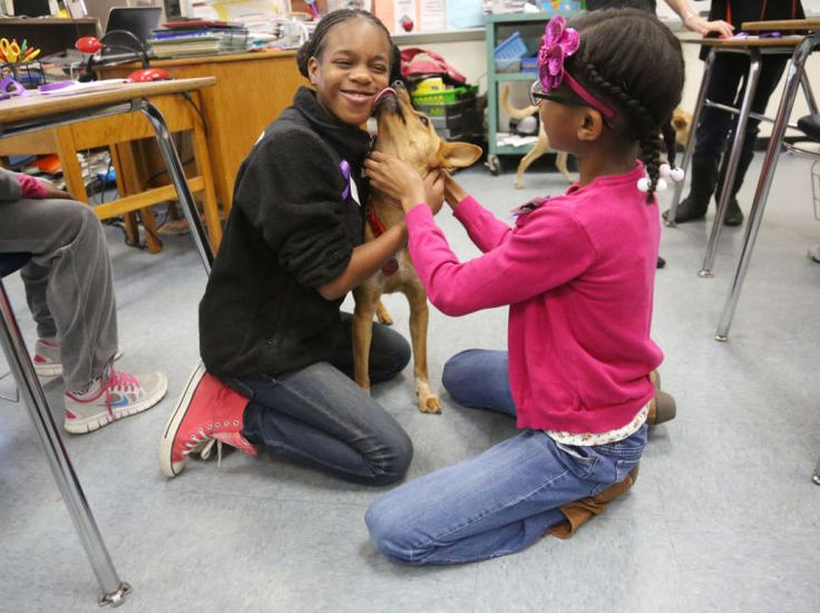 Dogs in classroom helping students learn empathy