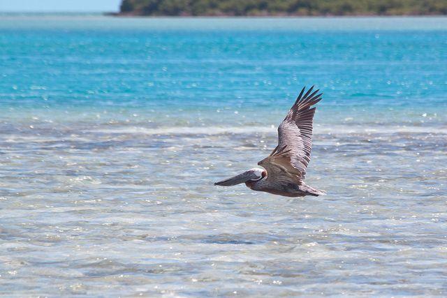 Turks and Caicos, un paraíso exclusivo del Caribe http://guia.viajobien.com/5-razones-para-visitar-turks-and-caicos/