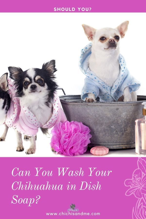 Can You Wash Your Dog With Dawn Dish Detergent Title Dish Soap As Shampoo In 2020 Dish Soap Soap Chihuahua