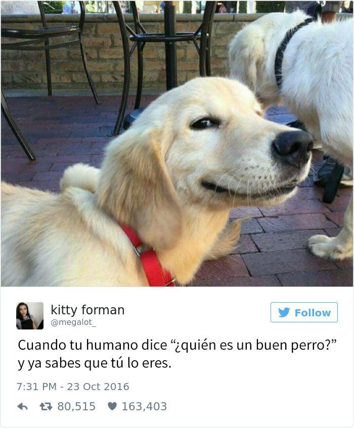 15 Tuits Sobre Perros Que Te Mataran De Risa Memes Perros Perros Graciosos Perros
