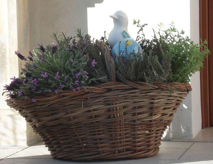 Le erbe aromatiche, da buone amiche, si prestano ad una simpatica compozione.
