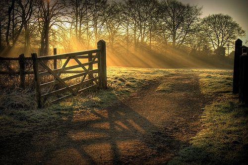 fence in morning sunlight