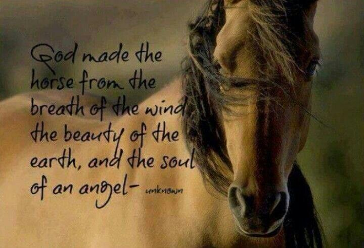 GOD made horses                                                                                                                                                     More