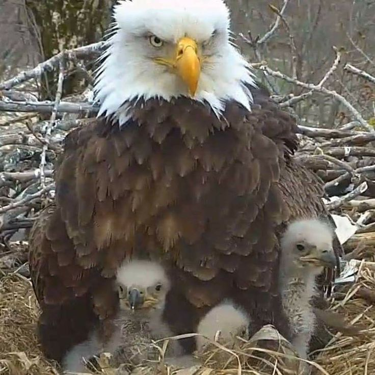 Decorah Mom with 26, 27 and 28.