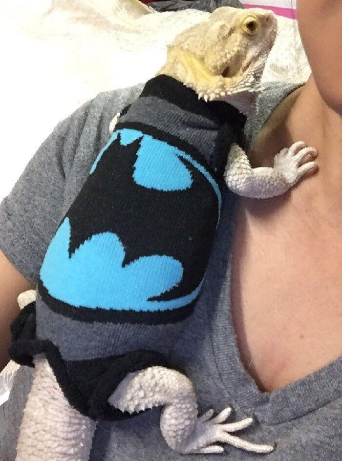 NEW BATMAN DESIGN SUPER HERO XLARGE SLEEVELESS BODY SHIRT 4 MALE BEARDED DRAGON  | eBay