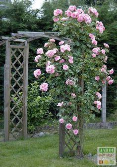 3 gestes pour des rosiers g n reux entretien rosier entretien des rosiers et les rosiers. Black Bedroom Furniture Sets. Home Design Ideas
