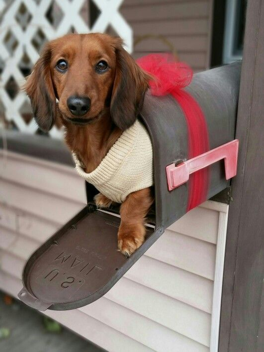 Hiding from that vacuum again... ♥