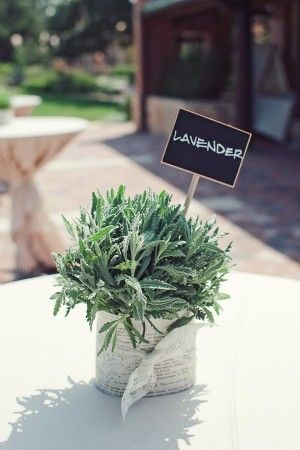 Potted lavender with lace wrap | www.merveilleevents.com/ | photography by www.jnicholsphoto.com/