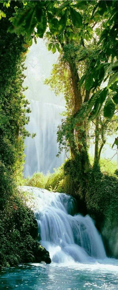Caledon Forest inspiration