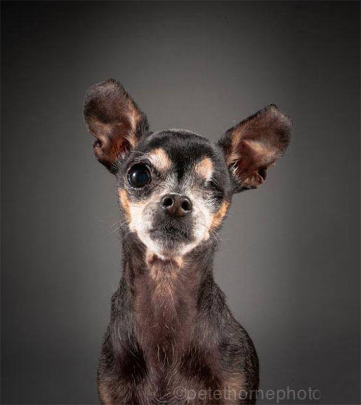 Stella, 12 años  Old Faithful: Conmovedora Serie de Retratos de Perros en Avanzada Edad | FuriaMag | Arts Magazine