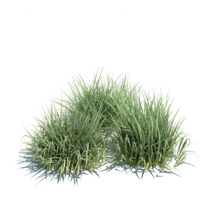 Green Grass By Evermotion Highly Detailed 3d Model Of Plant With All Textures Shaders And Materials It Is Ready Grass Photoshop Tree Photoshop Plant Texture