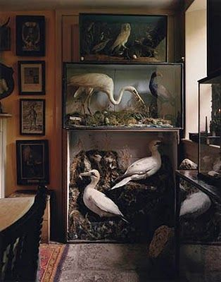 AH!!! This is what I kind of want in my pet/natural history room.